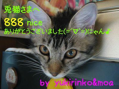 888nice.jpg